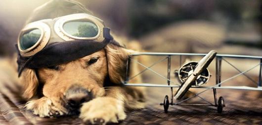 Cane viaggiatore